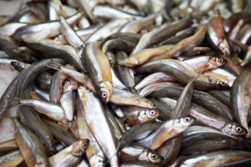 Quelques conseils pour manger du poisson sans trop for Manger pour poisson