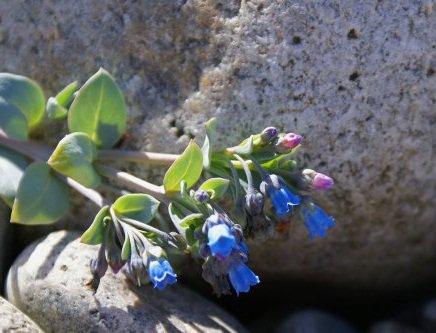 L hu tre v g tale une plante croquer mon quotidien for Plante huitre