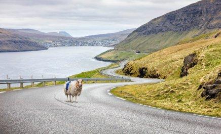 sheepview360