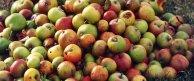 L'association des croqueurs de pommes Crédits Les croqueurs de pommes