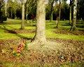 Les cendres sous le coup de la loi (Wikipedia Commons/Boonekamp)