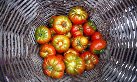 Panier de tomates Crédits DR