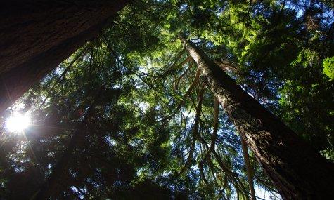 Forêt Crédits DB