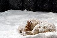 hibernation Crédits Sam