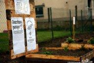 Incroyables comestibles Crédit Incroyables comestibles Rennes
