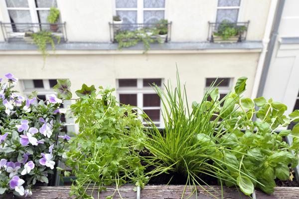 faire pousser des herbes aromatiques sa fen tre mon quotidien autrement. Black Bedroom Furniture Sets. Home Design Ideas