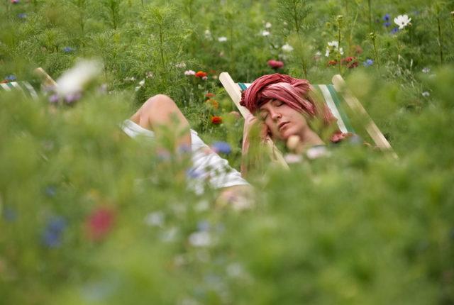 visuel fiche pratique écofestivalier mode d'emploi_sieste obligatoire dans les jacheres fleuries_MD