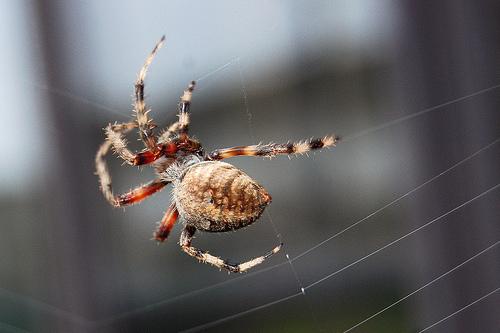 Qui a peur des araignées?