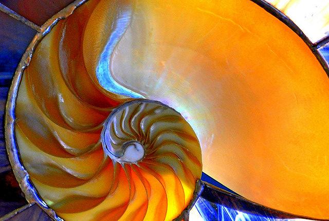 Le biomimétisme : quand les idées géniales viennent de la nature