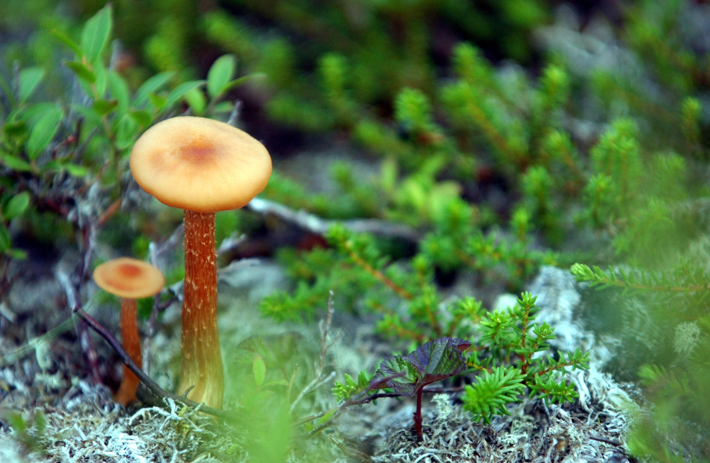 Ce que vous ne saviez pas sur les champignons