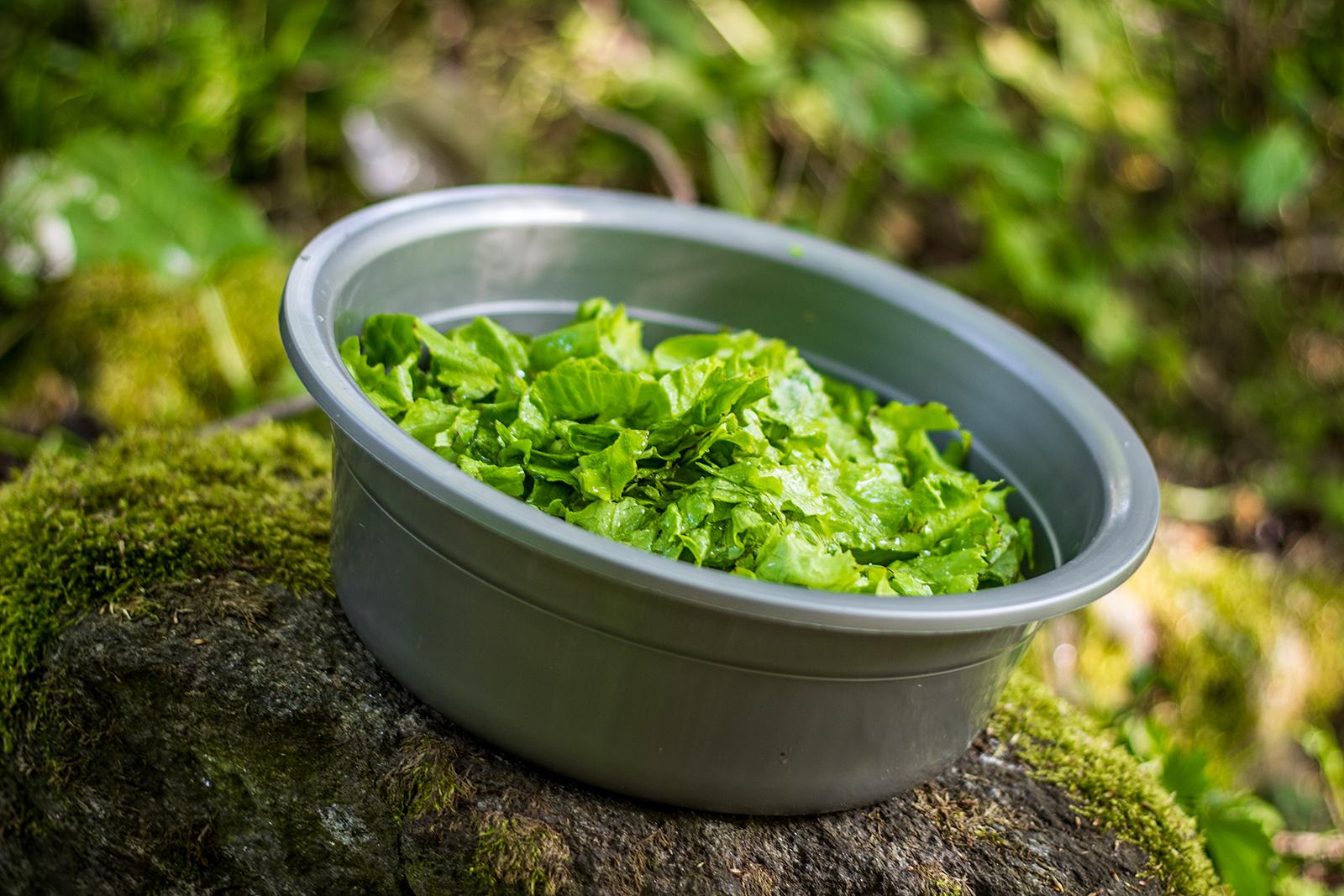 Pourquoi manger de la salade ?
