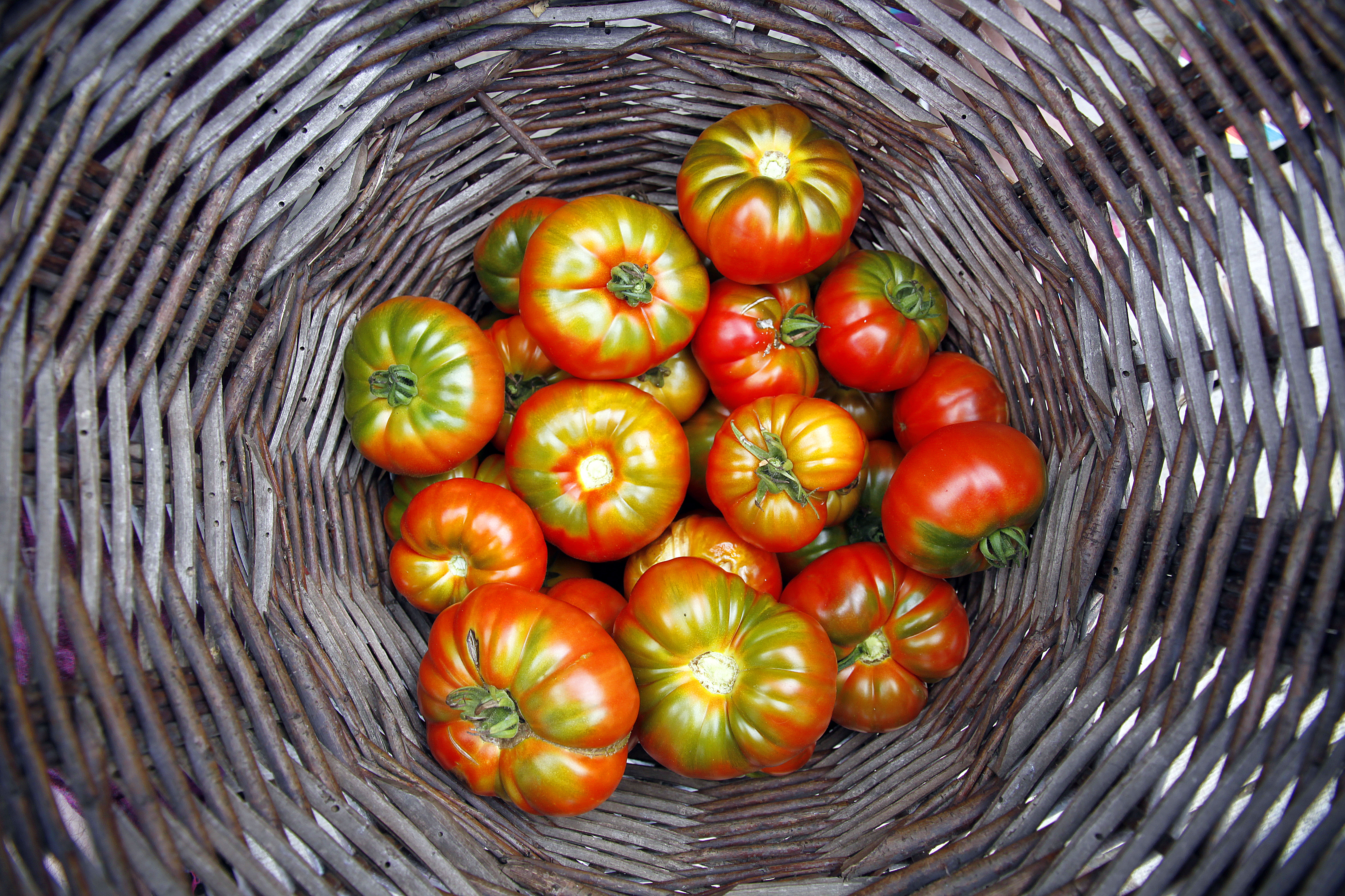 Comment choisir une bonne tomate?