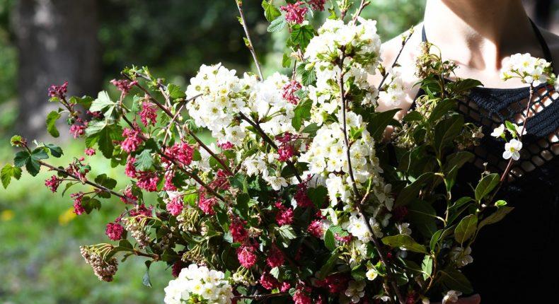 Des branches fleuries, vive le printemps !