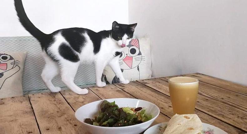 Tous les chats présents peuvent être adoptés via l'association Ron'Rhônes. © Au Bonheur des chats