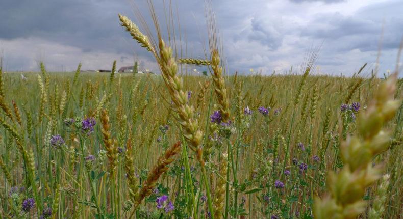 Le modèle TYFA prévoit d'augmenter de 30 % la production végétale en Europe. © Luc Legay