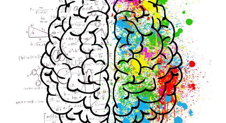 Les deux hémisphères de notre cerveau.