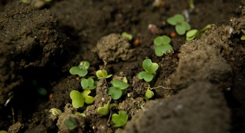 Nos sols sont de moins en moins riches en biodiversité. © Brian Boucheron