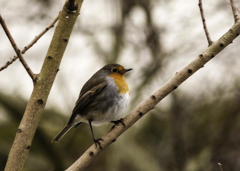 Il faut sauver nos oiseaux !, de Marc Duquet