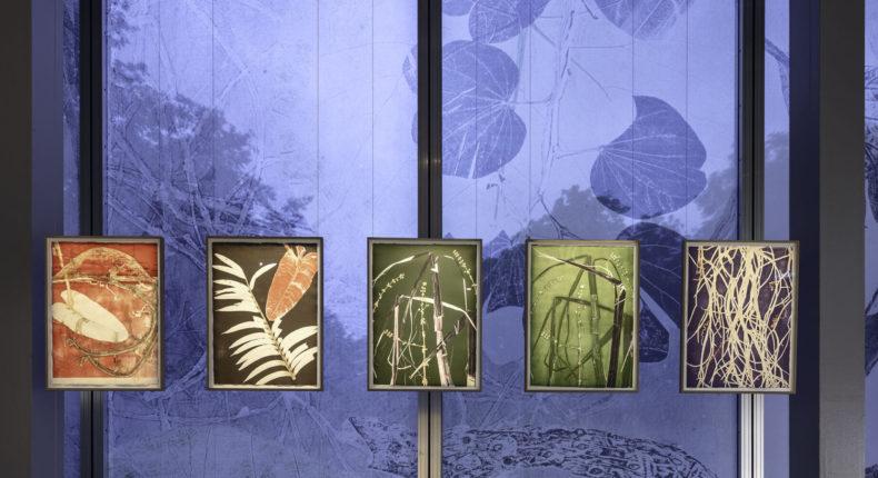 Nous les Arbres | Fondation Cartier pour l'art contemporain