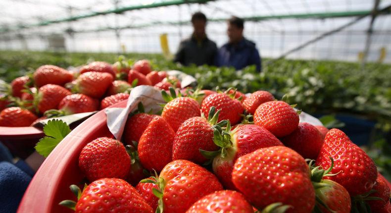 Environ 130 000 tonnes de fraises sont consommées en France chaque année. © Republic of Korea