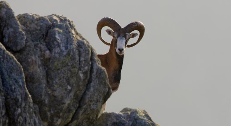 Ingo Arndt/Wild Wonders of Europe © Rewilding Europe