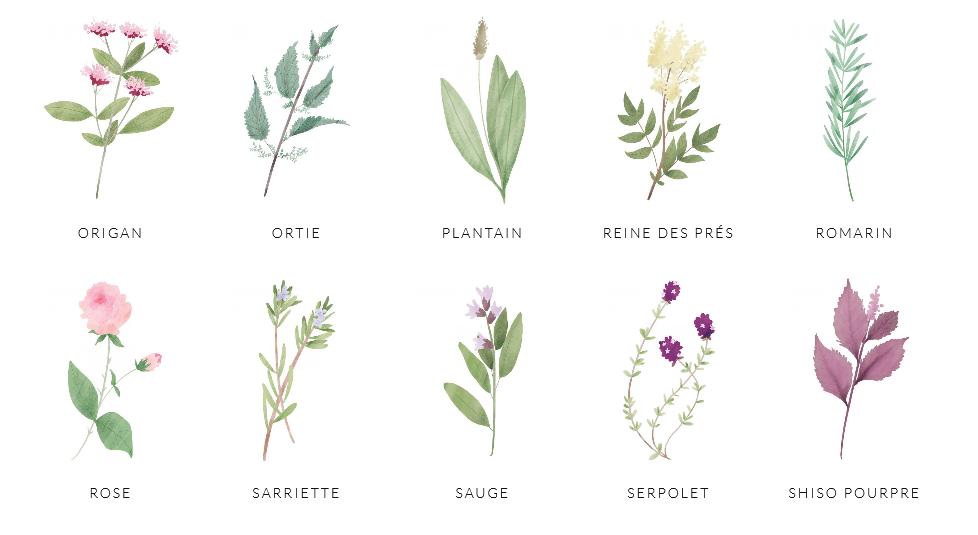 Quelques unes des plantes proposées par l'Amante verte.